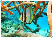 ТУР ПО АВСТРАЛИИ. Сидней – Кернс (Большой Барьерный риф) - Золотое Побережье 12 дней / 11 ночей (без учета международного перелета).