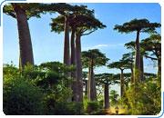 МАДАГАСКАР №1. Экскурсионный тур + пляжный отдых. Перине и Нуси-Бе - дикая природа и роскошные пляжи 8 дней / 7 ночей