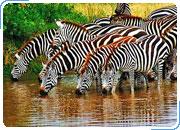 Комбинированный тур ЗАМБИЯ – БОТСВАНА: Водопад Виктория, Замбия + Национальный парк Чобе, Ботсвана 4 дня/3 ночи