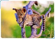 ЗИМБАБВЕ – БОТСВАНА: Водопад Виктория, Зимбабве + Национальный парк Чобе + Дельта Окаванго, Ботсвана 7 дней/6 ночей
