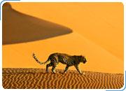 Комбинированный тур ЮАР - НАМИБИЯ - БОТСВАНА - ВОДОПАД ВИКТОРИЯ, ЗИМБАБВЕ – ЗАМБИЯ: Непознанная Африка 21 день/20 ночей