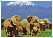 КЕНИЯ. Сафари-тур САФАРИ НЬЯТИ: Найроби - Абердаре - Накуру - Масаи Мара - Момбаса. 11 дней / 10 ночей