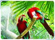 Экологическая прогамма по Бразилии Туры в AMAZON ECO PARK LODGE 4* Туры на 2, 3 и 4 дня, круиз Встреча вод