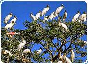 Экологический тур по Бразилии РИО-ДЕ-ЖАНЕЙРО - ПАНТАНАЛ - ИГУАСУ. 10 дней/ 9 ночей