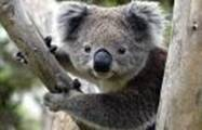 Australia - 01.jpg
