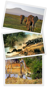 Описание: Приключения в Кении и Танзании