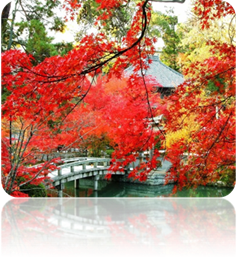 http://xn----8sbiecm6bhdx8i.xn--p1ai/sites/default/files/China_autumn_1.jpg